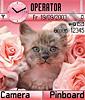 Котик в розах