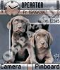 Пара симпатичных щенков